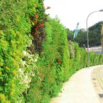 NAPIER STATION ROAD GREEN WALL