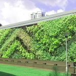 Senja Cashew GREEN WALL