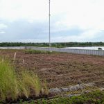 Thailand Green Roof 3