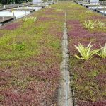 Ang-Mo-Kio-Station-Green-Roof