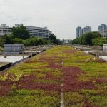 Ang-Mo-Kio-Station-Green-Rooftop