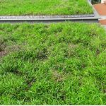 Wandervale-Green-Roof