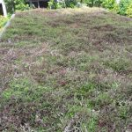 Wandervale-Singapore-Green-Roof