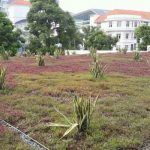 SAC-Green-Roof-2