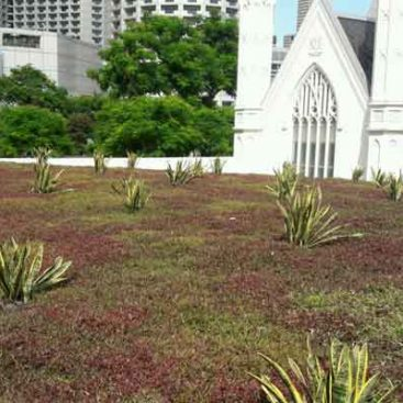 SAC-Green-Roof