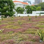 SAC-Green-Roof-4