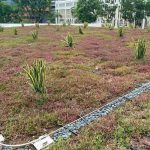 SAC-Green-Roof-5