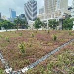 SAC-Green-Roof-6