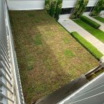 pathlight-green-roof-2